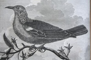 Illustration d'oiseau